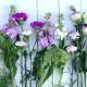 Seasonal allergies solutions